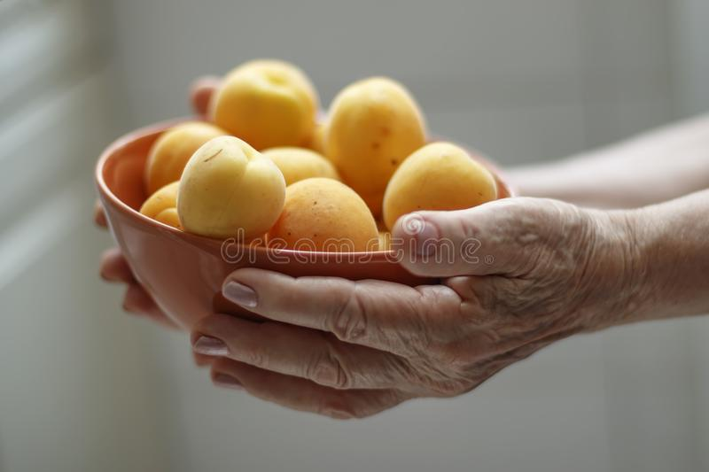 Hands of an elderly woman holding a bowl with apricots stock image