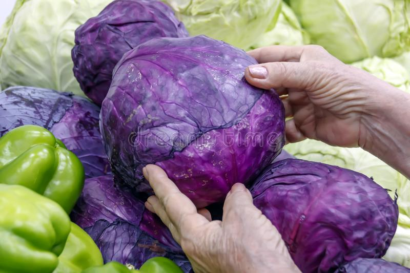 Hands of an elderly woman holding cabbage royalty free stock photography