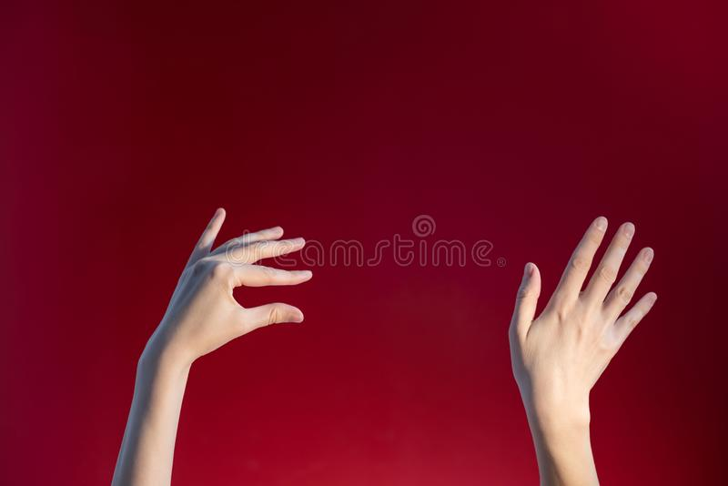 Hands of a fair-skinned woman on a red-burgundy background stock photography
