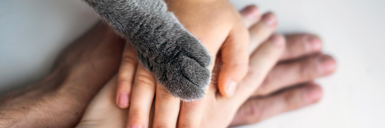 The hands of the family and the furry paw of the cat as a team. Fighting for animal rights, helping animals BANNER, LONG stock photos