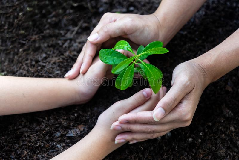 Hands family holding young plants cupping royalty free stock photos
