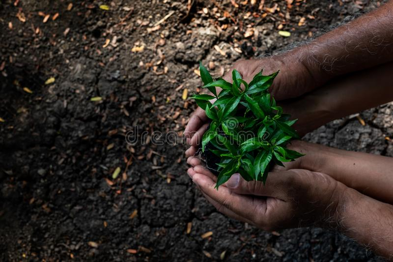 Hands father and daughter holding young plants on the back soil in the nature park of growth of plant for reduce global warming. stock photo