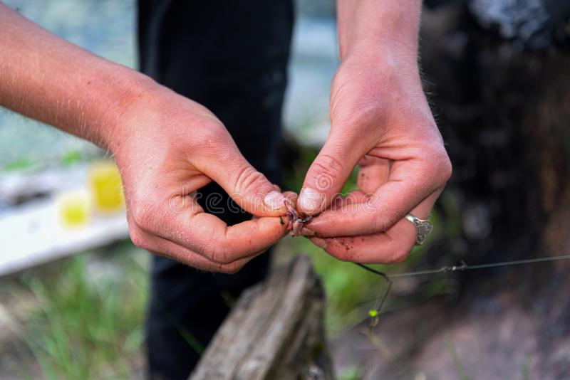 The hands of the fisherman on fishing wear a worm on the hook stock photos