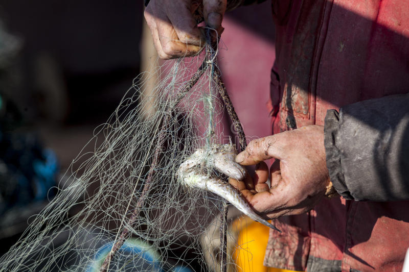 Hands of fisherman stock photography