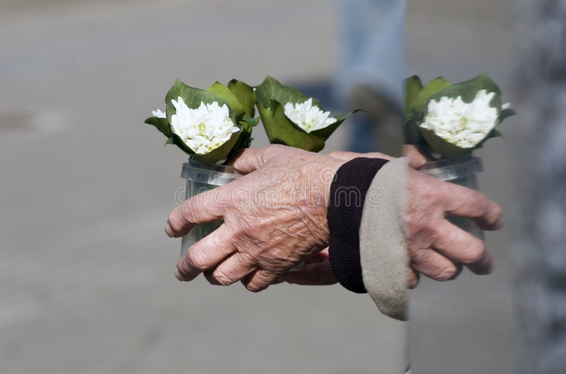 Hands and flowers. Hands of old woman and flowers stock photo