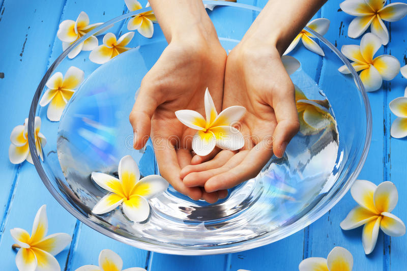 Hands Flowers Water. A womans hands holding a single frangipani flower above a glass bowl filled with water on a blue painted background royalty free stock photos