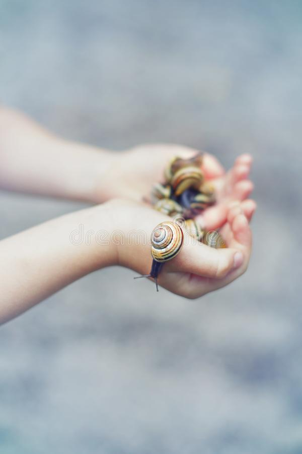 Hands full of snails. Hands full of. Closeup macro of child hands palms holding many little small forest garden yellow striped snails molluscs. Summer kids stock image
