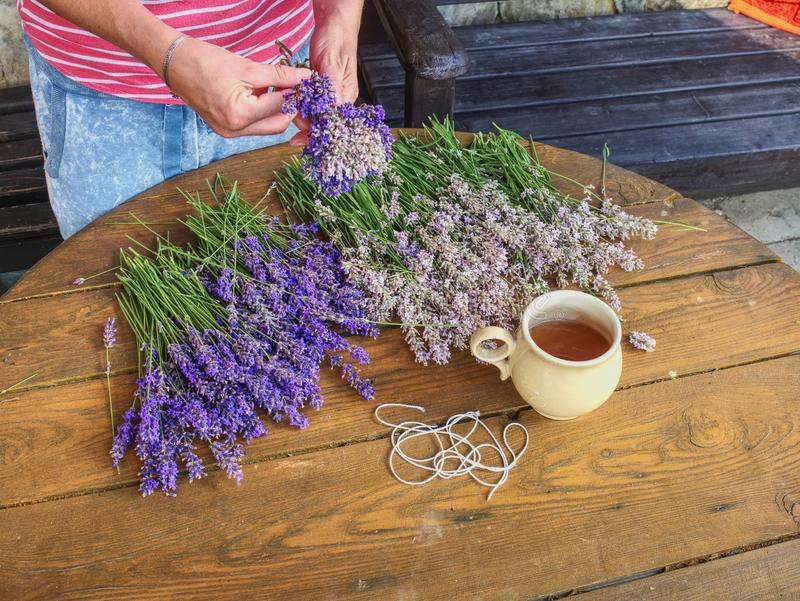 Hands of gardener woman create relaxing smell herbal bouquet. stock image