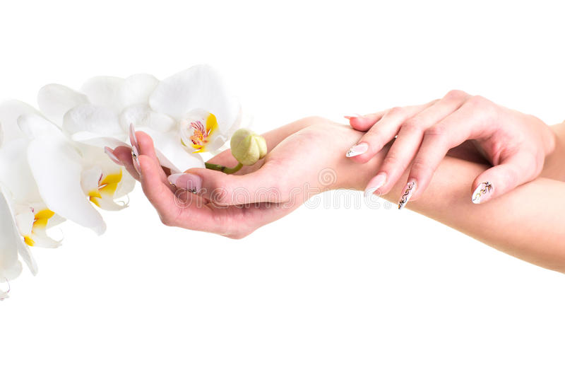 Download Hands Of The Girl Holding An Orchid On Isolated White Stock Image - Image: 30370883