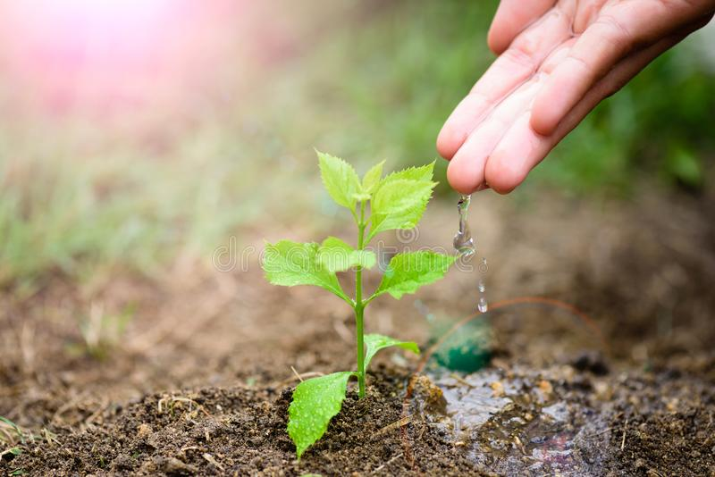 Hands giving water to a young tree for planting. Earth Day concept stock photos