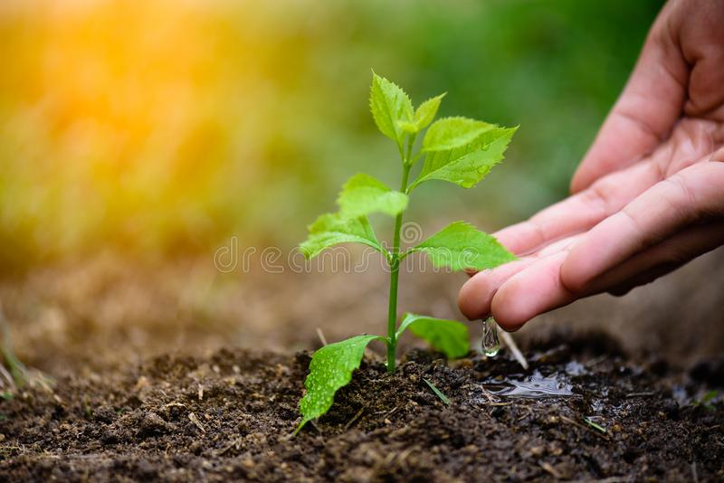 Hands giving water to a young tree for planting. Earth Day concept stock images