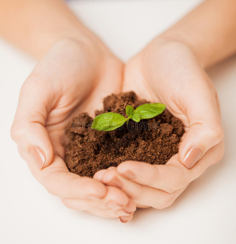 Download Hands With Green Sprout And Ground Stock Photo - Image: 32283892