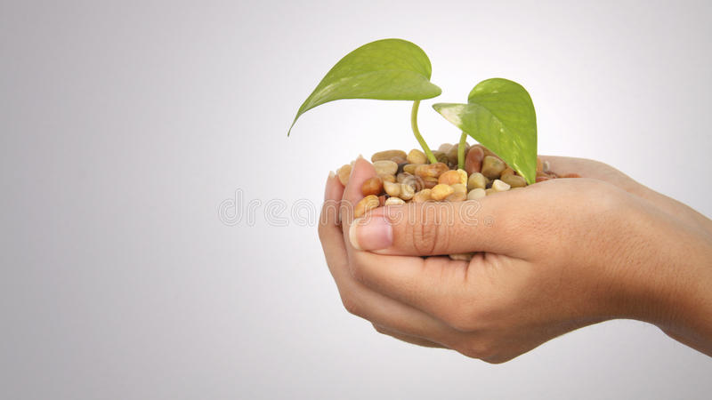 Hands with growing plant 2 royalty free stock photo