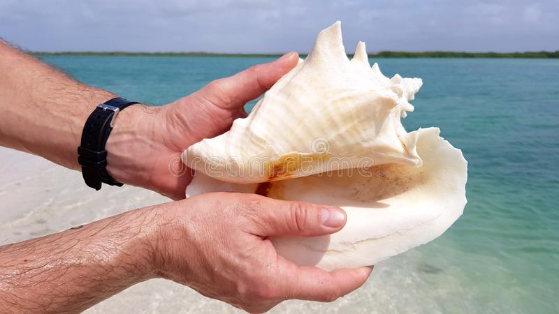 Hands holding beatiful shell on the beach of Bonaire royalty free stock photo