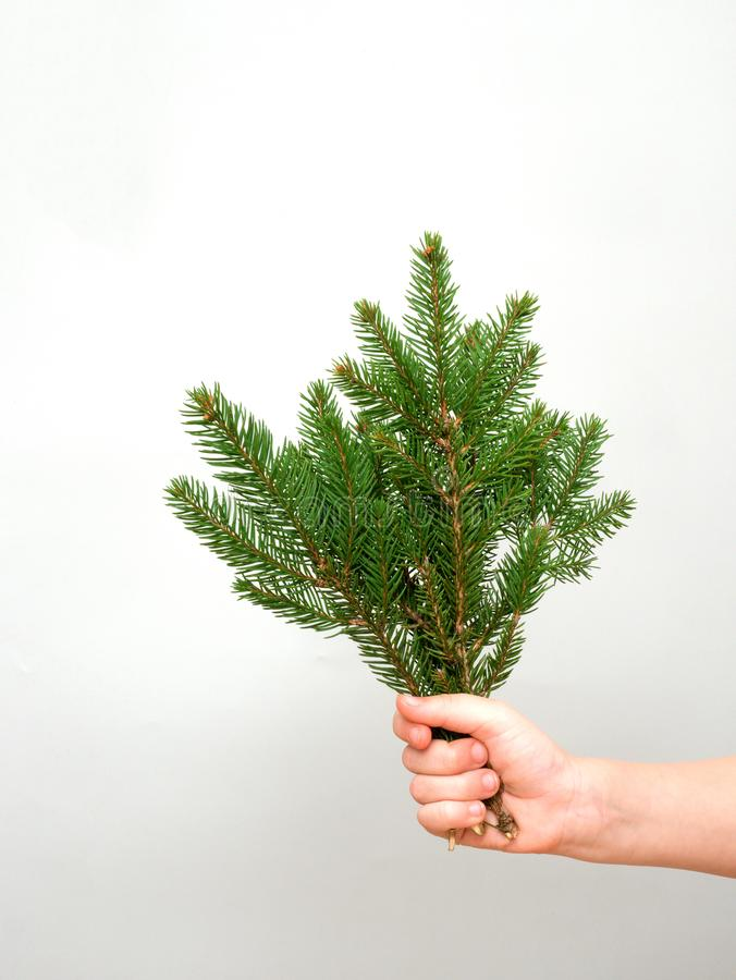 Hands holding bunch of fir tree branches on gray background while making Christmas decorations , copy space stock photos