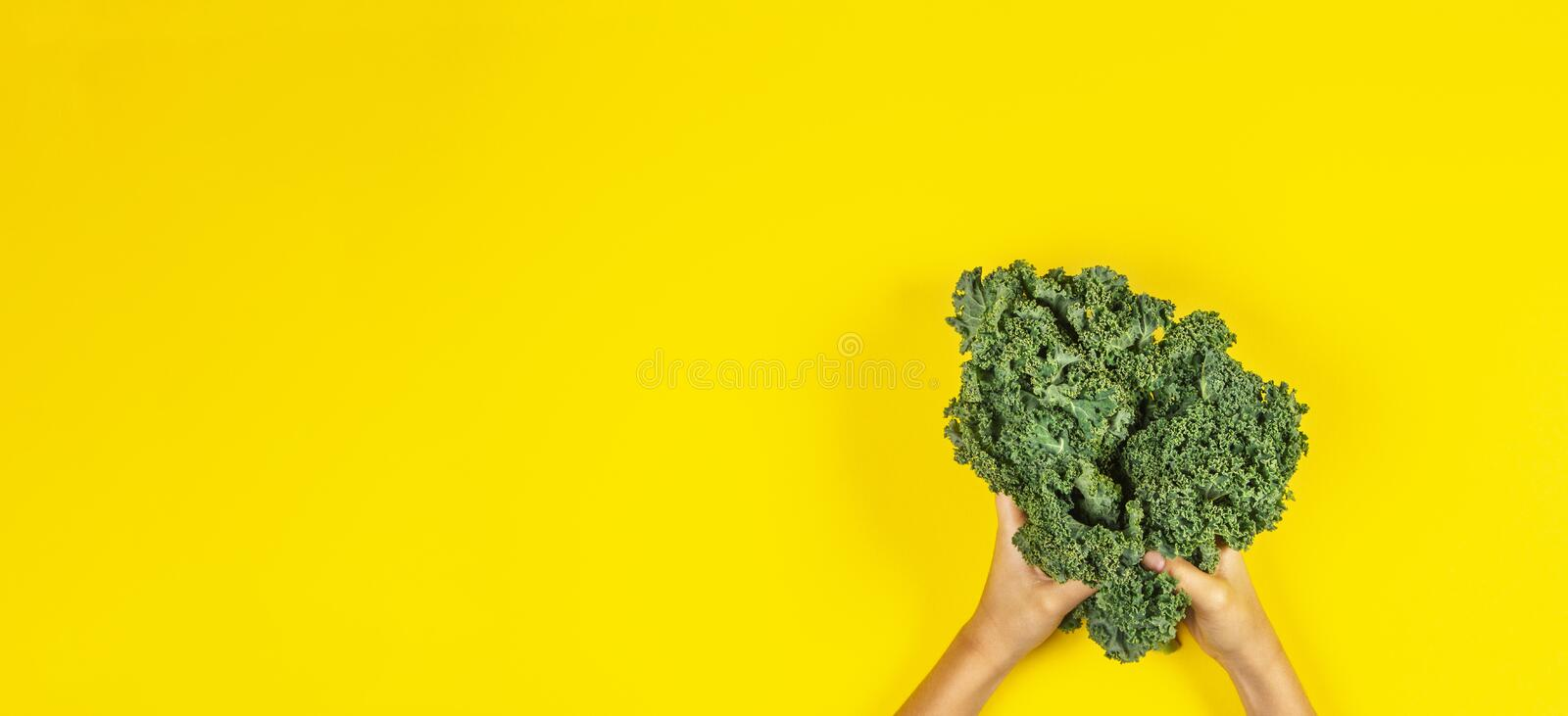 Hands holding bunch of kale leaves over yellow background. Hands holding a bunch of kale leaves over yellow background stock photos