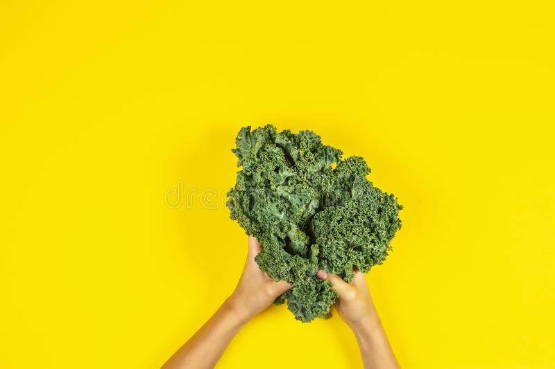 Hands holding bunch of kale leaves over yellow background. Hands holding a bunch of kale leaves over yellow background royalty free stock photos