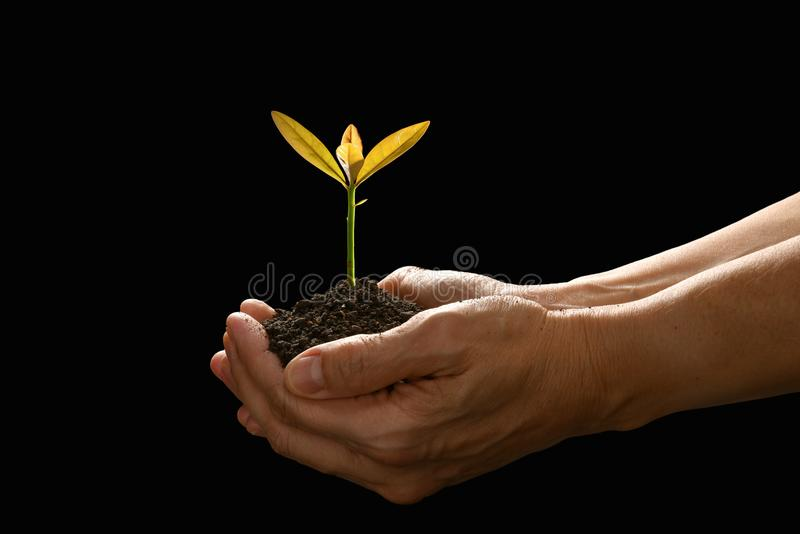 Hands holding and caring a green young plant royalty free stock image