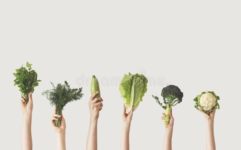 Hands holding different green vegetables on isolated background stock images
