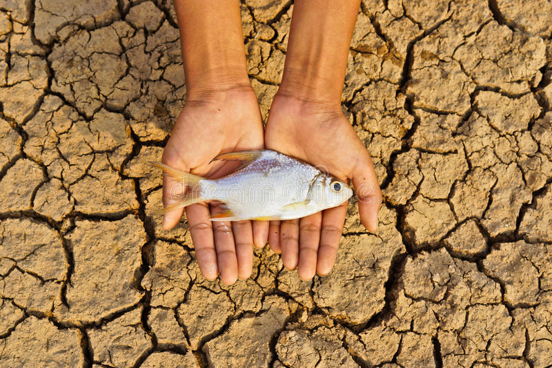 Hands holding fish died on cracked earth stock image