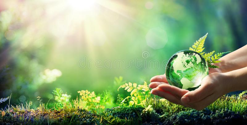 Hands Holding Globe Glass In Green Forest royalty free stock photos