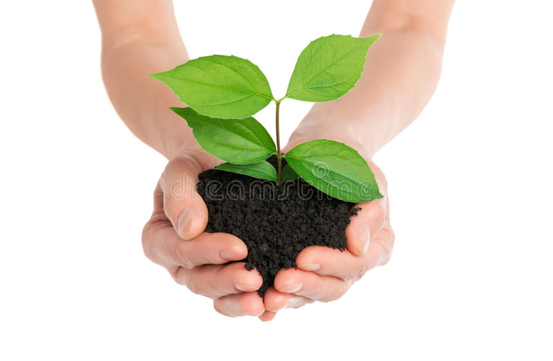 Hands holding green plant new life concept. Isolated royalty free stock photo