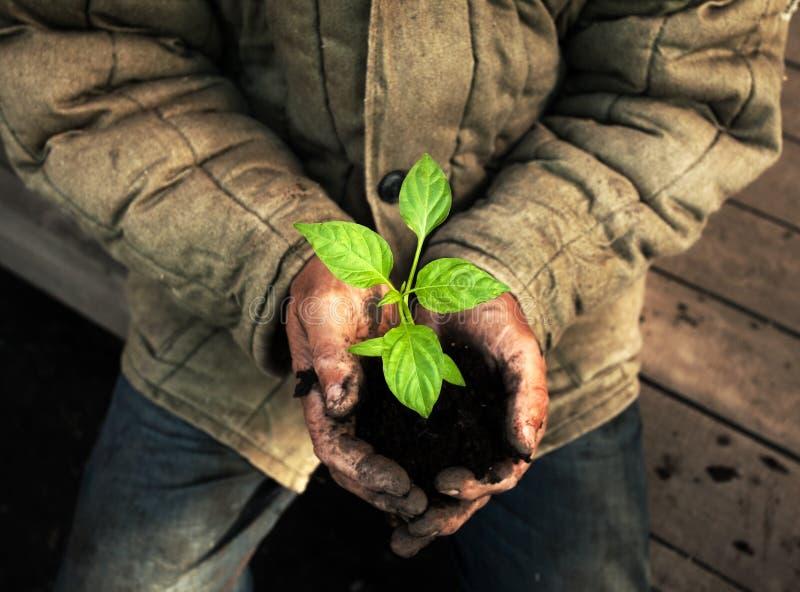 Hands holding green sapling with soil. Gardener man royalty free stock image