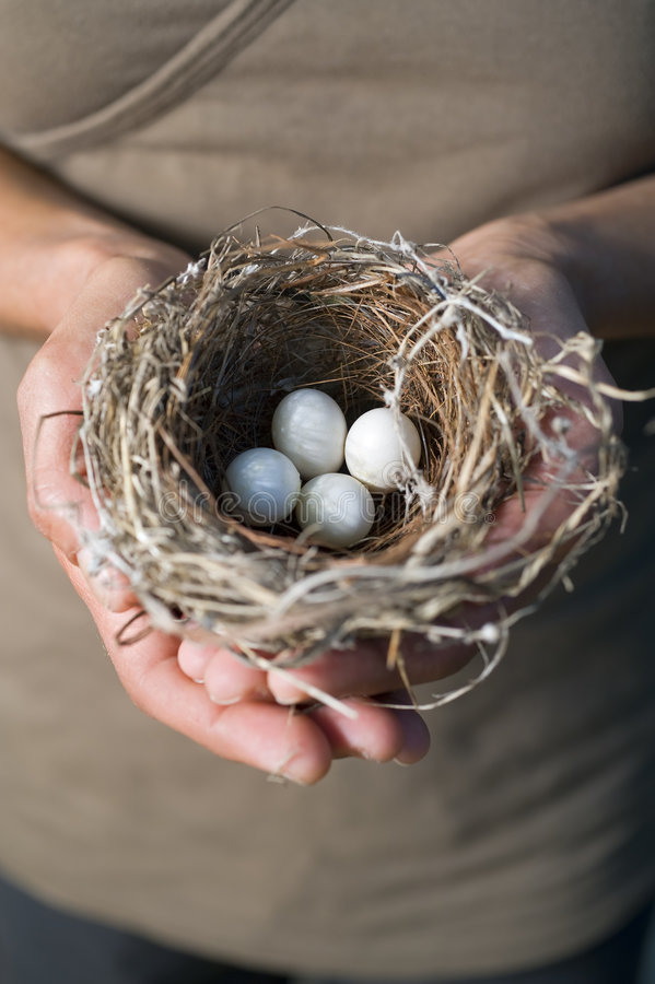 Hands Holding Nest With Eggs Stock Photography