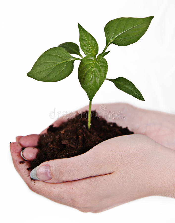 Hands holding a plant stock photography
