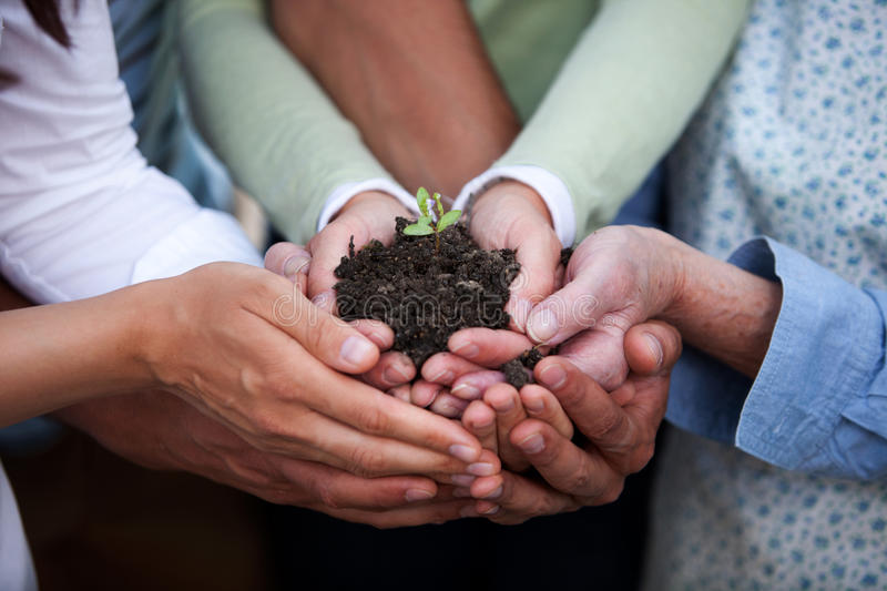 hands holding plant stock image  image of growing  female