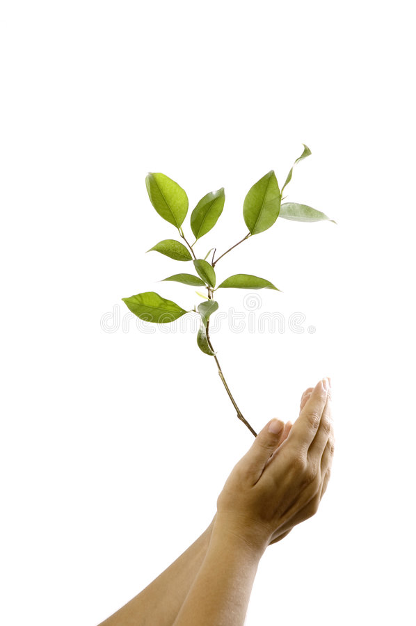 Hands Holding A Plant Royalty Free Stock Photography