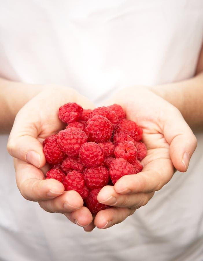 Hands Holding Ripe Raspberries royalty free stock photos