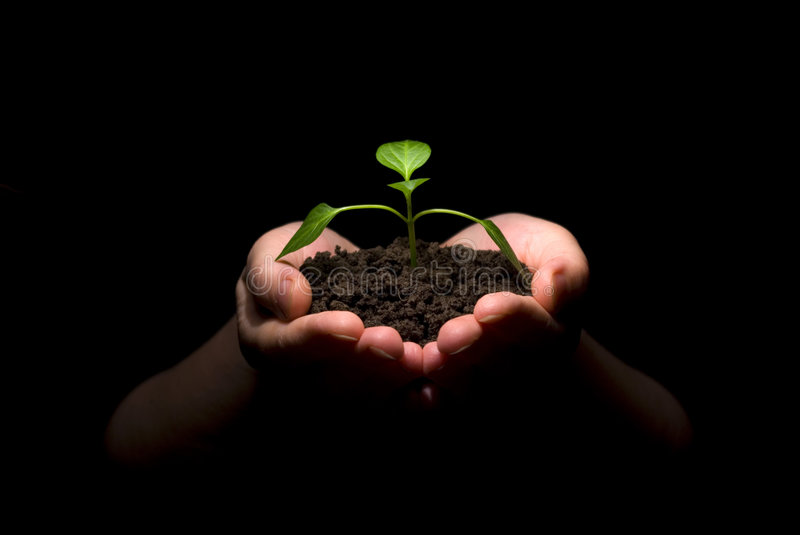 Download Hands holding sapling stock image. Image of relationship - 5084107