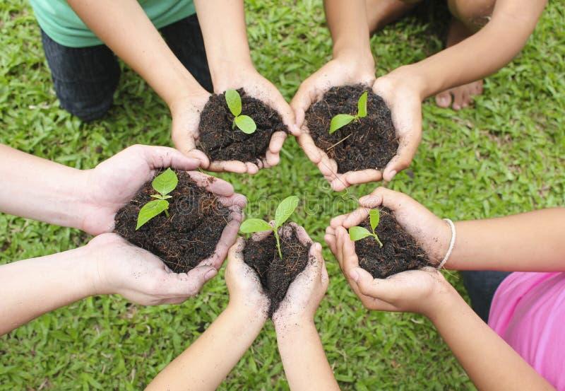 Hands holding sapling in soil surface. Children hands holding sapling in soil surface royalty free stock image
