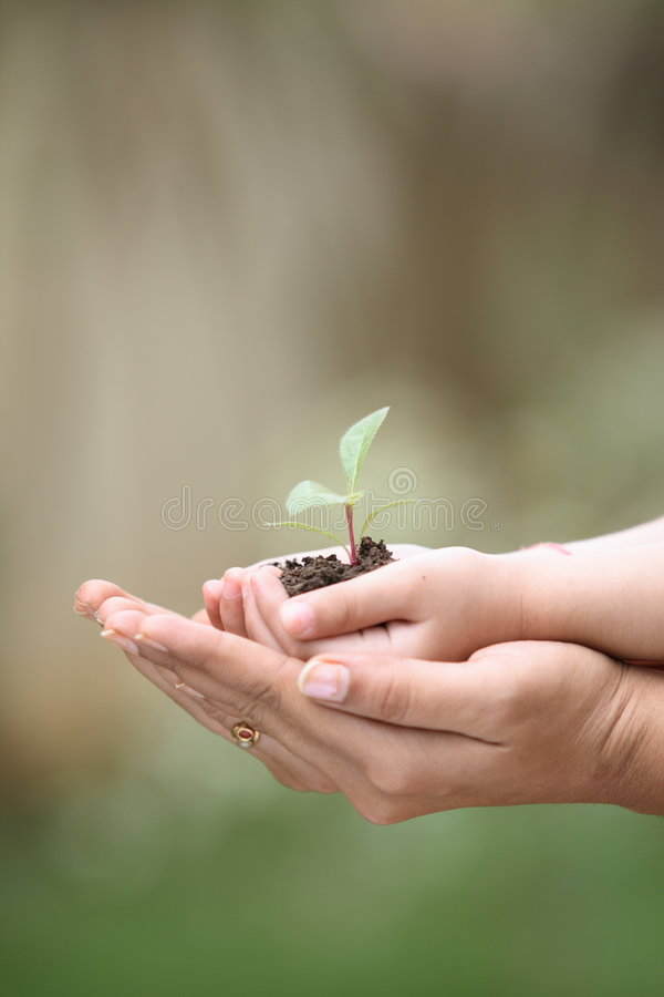 Download Hands holding seedlings stock image. Image of care, baby - 4634335