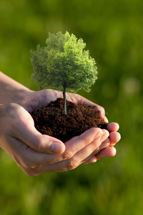Hands holding small tree. Two cupped hands holding a small tree planted in brown soil royalty free stock photo