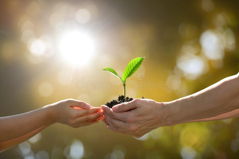 Hands holding together a green young plant. Two hands holding together a green young plant stock photos
