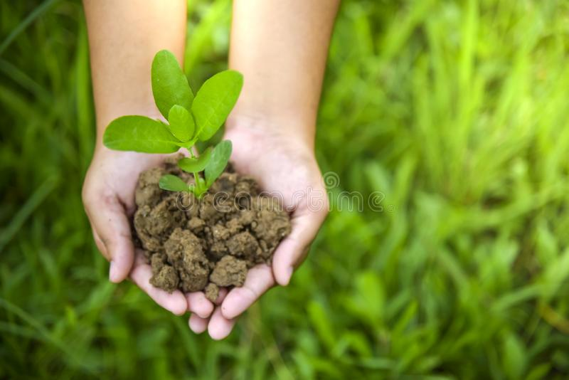 Hands holding a tree growing on cracked ground royalty free stock image