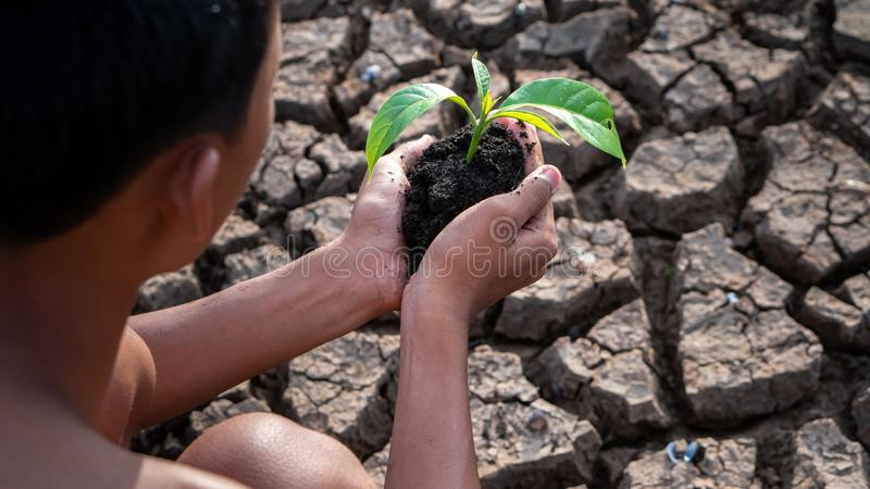 Hands holding a tree growing on cracked ground. global warming theme human hands defending green grass sprout rising from rainless. Cracked ground. Concept save stock image