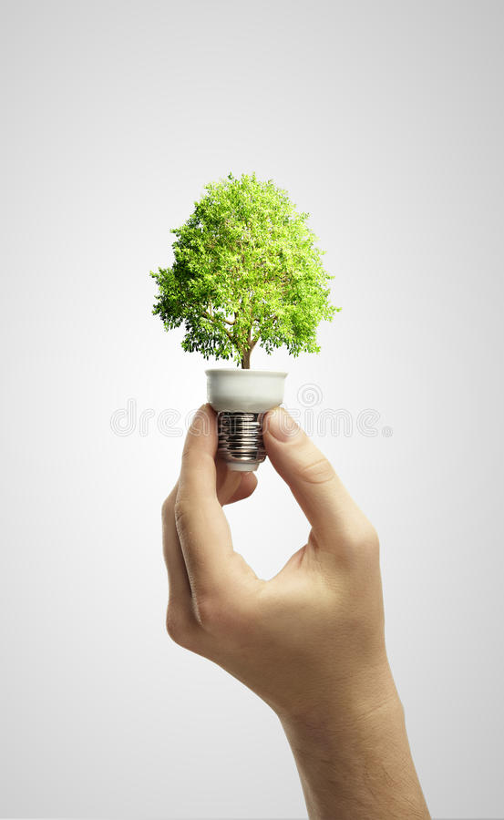 Hands Holding Tree Growing Out Of Electric Bulb Stock Images