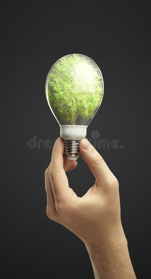 Download Hands Holding Tree Growing Out Of Electric Bulb Stock Image - Image of creativity, bulb: 25046723