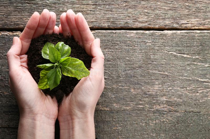 Hands holding young plant stock photography
