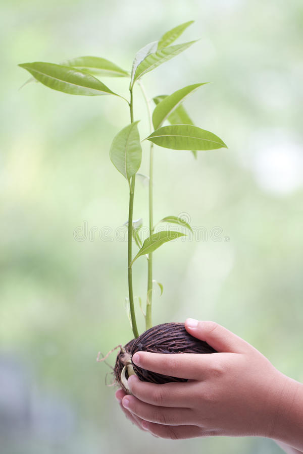 Hands holding young plant. stock image