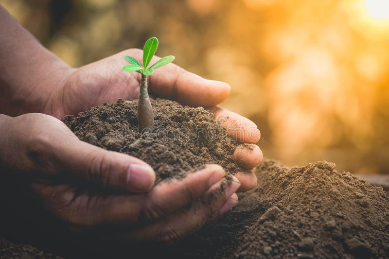 A hands holding young plant for growth on soil with around the crisis environment. stock photos