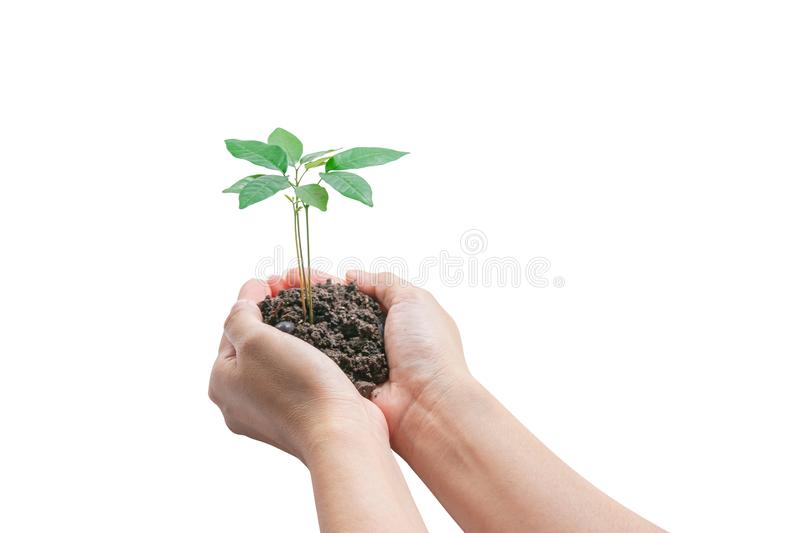 Hands holding a young plant, Isolated on white background, clipping path. Concept of Environmental royalty free stock photos
