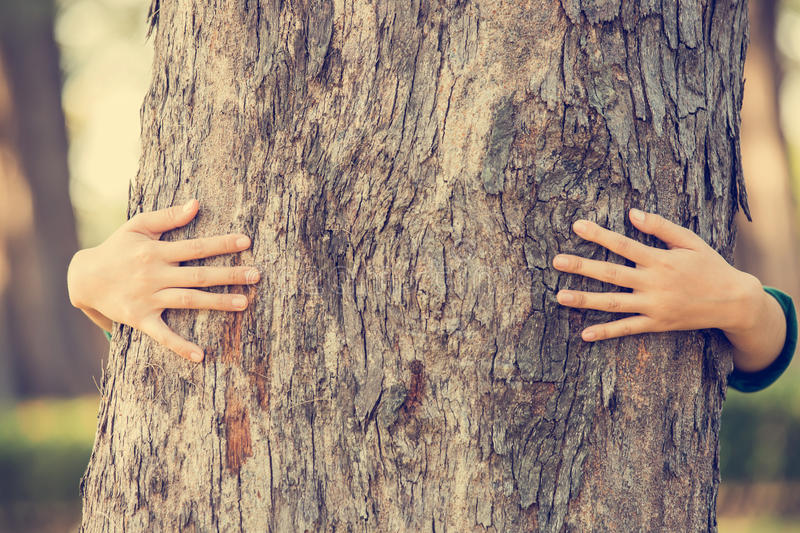 Hands hugging tree. Close-up of hands hugging tree royalty free stock photography