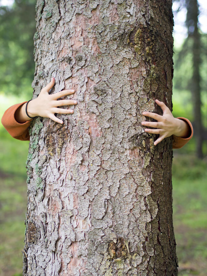Hands hugging tree royalty free stock photos