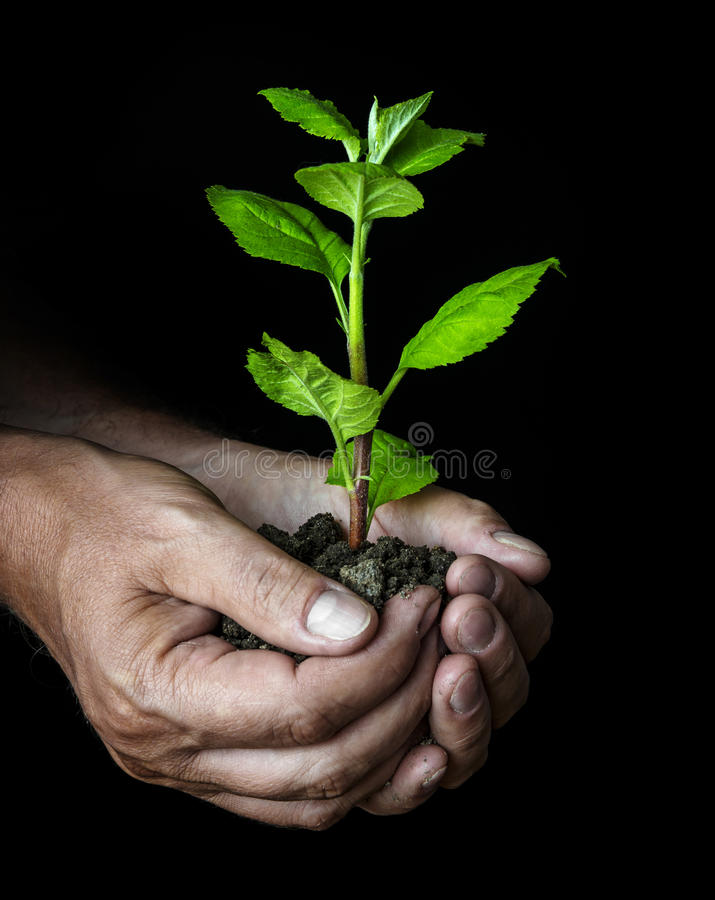 hands with a little tree stock photos