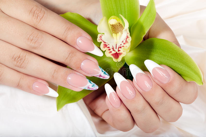 Hands with long artificial french manicured nails holding an orchid flower. Hands with beautiful long artificial french manicured nails holding an orchid flower royalty free stock photography