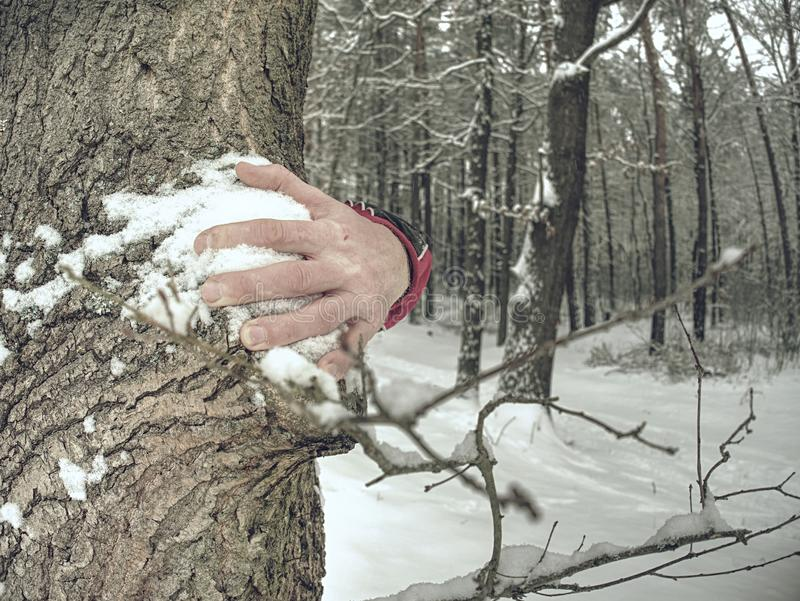 Hands with long frozen fingers touch tree bark. Male hands stock image